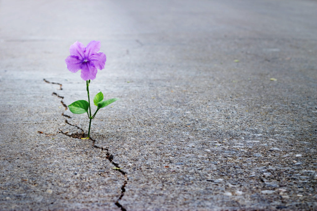 flower growing out of crack in ground